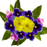 cveti