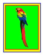 Развивающая игра для детей — Где сидит попугай?